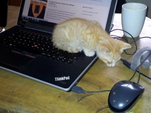 Kitten looking at a computer mouse