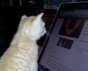 Cat reading the screen whilst Nepeta Consulting train a client on how to maintain their website